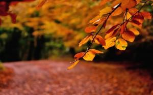 nature-landscapes_widewallpaper_autumn-leaves_9113